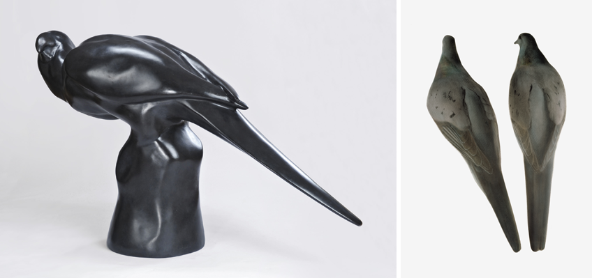 Woodson Art Museum's exhibit Legacy Lost & Saved: Extinct & Endangered Birds of North America features artworks from their collection and loans, including three Lost Bird sculptures accompanied by the Passenger Pigeon illustration