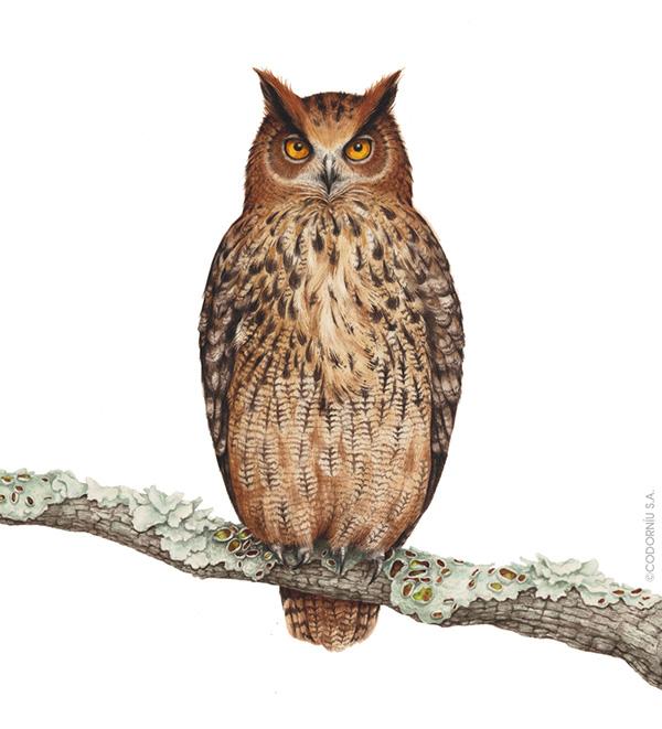 """""""Owl"""" by Eunike Nugroho"""